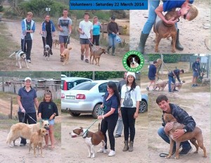 Volunteering activities at the Lucky Lucy Farm. Taking our rehab dogs for walks.